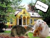Újra patkányok rohangálnak Gyömrőn